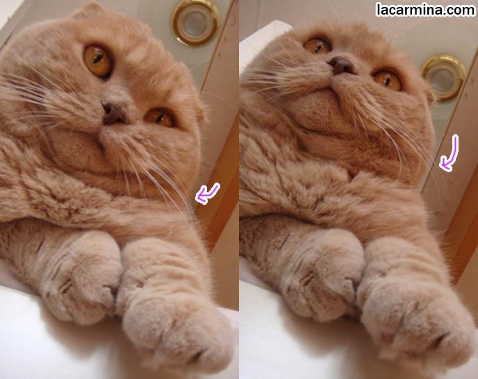 world record fattest cat