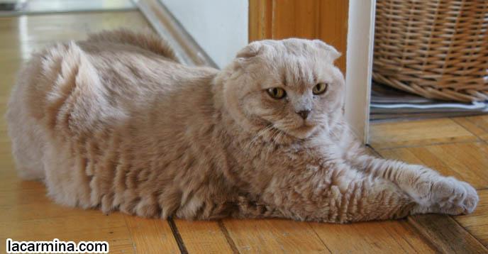 Cat posture chart