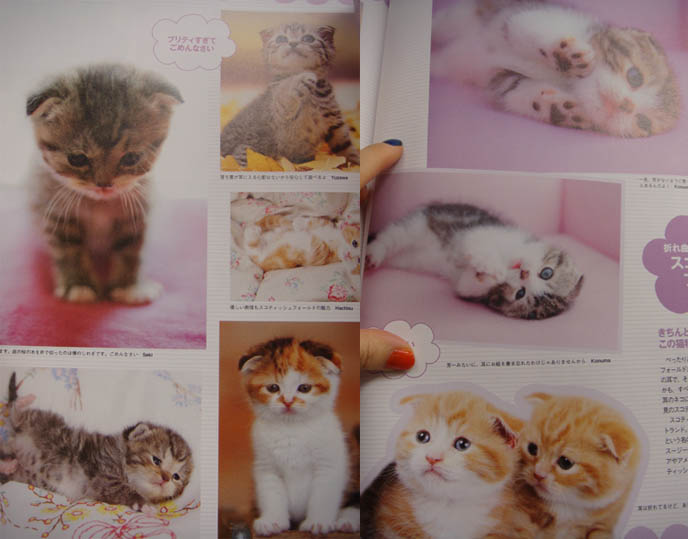 JAPANESE CAT MAGAZINE, SCOTTISH FOLD KITTENS FOR SALE, CLASSIFIEDS