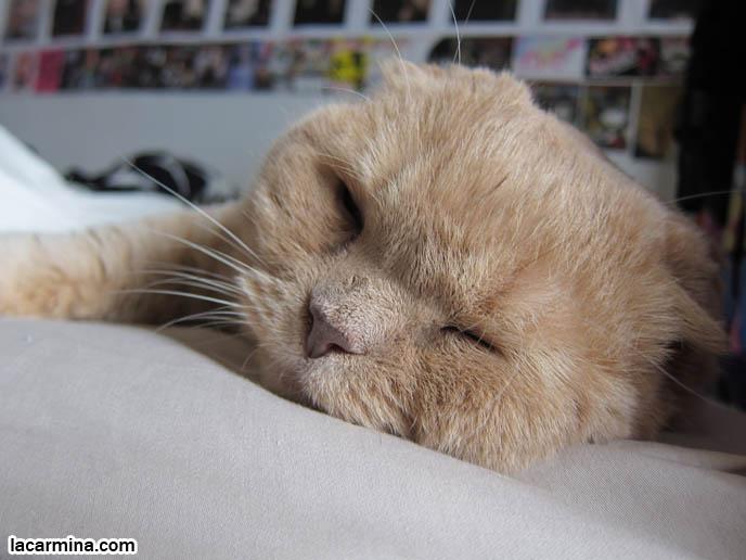 Garfield face down