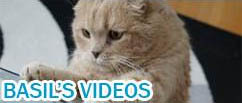 Scottish Fold cat videos, funny video pets lolcats