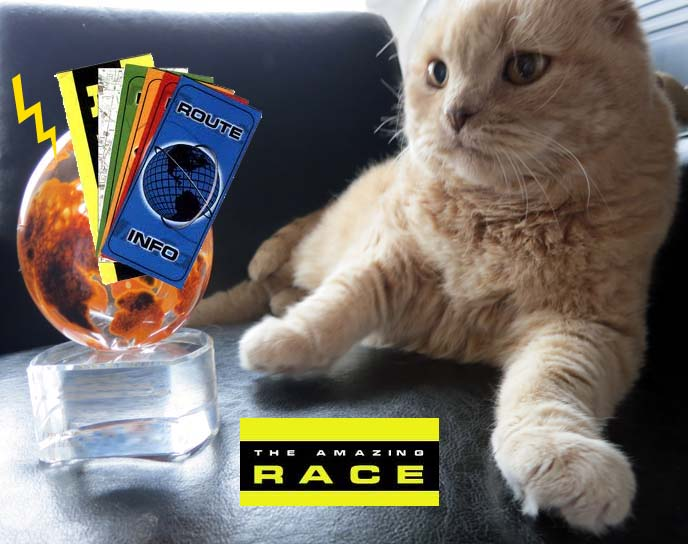 amazing race canada, amazing race casting, ctv amazing race, canadians amazing race, apply amazing race canada, competitors, submit video, packing tips, packing list, scottish fold cat, cutest cat ever, cutest cat in the world, designer sportswear, amazing race packing guide
