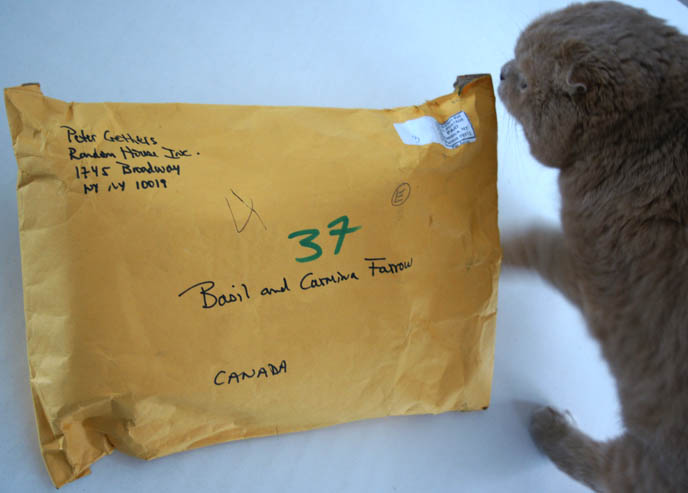 Peter Gethers and Scottish Fold cat Norton, books The Cat who Went to Paris, A Cat Abroad, The Cat who Lived Forever. Package for La Carmina and Basil Farrow in Canada.