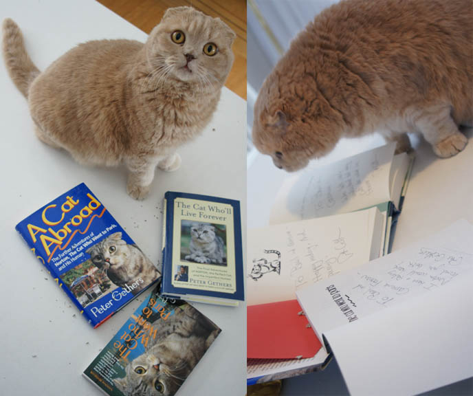 Signed, autographed books with cute yellow Scottish Fold cat. Peter Gethers or Russell Andrews, author and Random House Focus Features president. Fat, furry round kitty with Norton books, The Cat who Went to Paris, A Cat Abroad, The Cat who'll live Forever.