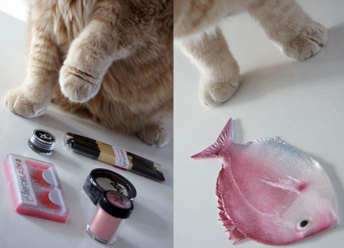 Cuberry makeup, compact powders, eyeshadows, brushes next to Scottish Fold cat's paws, big sideways short furry feet.