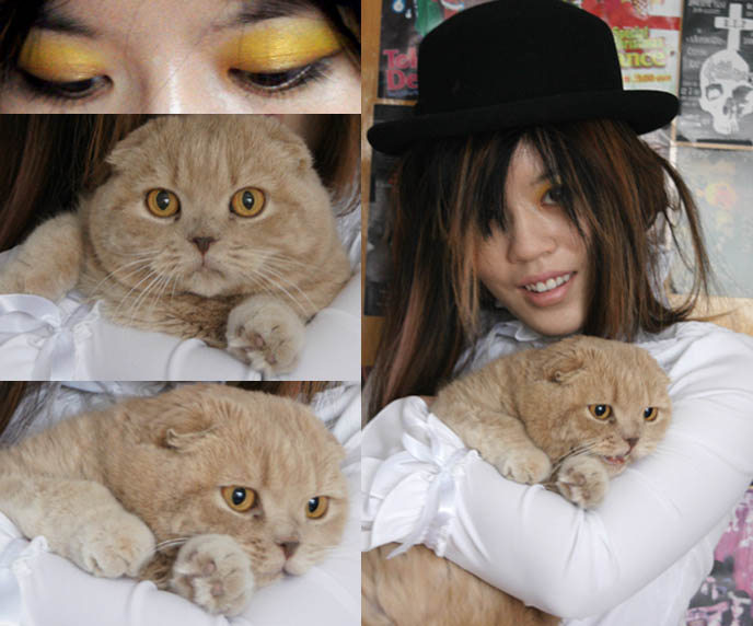 Scottish Fold cat, purebred yellow cat with folded ears. Bowler hat, Clockwork Orange costume. Cute Asian goth girl.