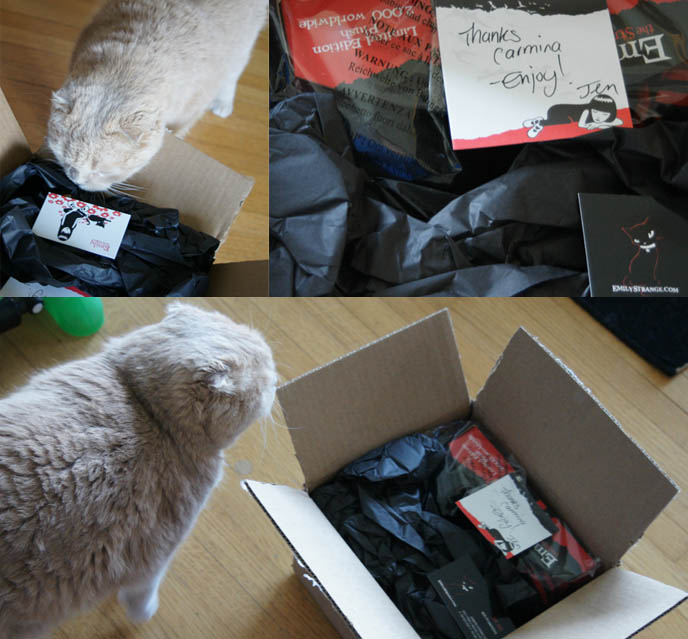 Cat pokes nose in box, cute Scottish Fold kitten playing with cardboard box and wrapping paper. Emily the Strange gift, Goth girl present, accessories.