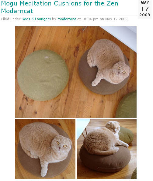 Moderncat article about cat meditation cushions, designer cat furniture and home decoration. Cute Scottish Fold Basil Farrow fat cat sitting on pillows.