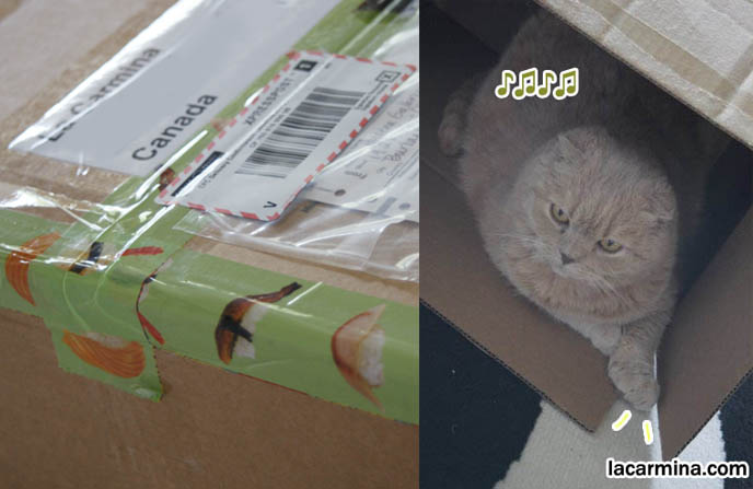 Sushi packing tape, scotch tape with cute designs, Japanese stationery. Cute Scottish Fold cat sitting jumping in cardboard box, Maru Japan cat video and blog.