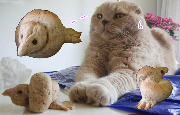 cute bird bread, how to bake cute animal bread rolls with faces, adorable faces on bentos, cute yummy time. Cutest Scottish Fold cat  with tiny ears, earless cat or kitten from american breeder