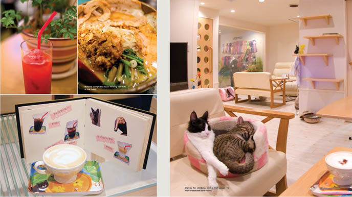cat cafes in Japan, cute pet cats on couches for customers to pet, cat themed restaurant, Japanese fantasy dining, Crazy weird wacky Tokyo theme restaurants, japanese maid cafes.
