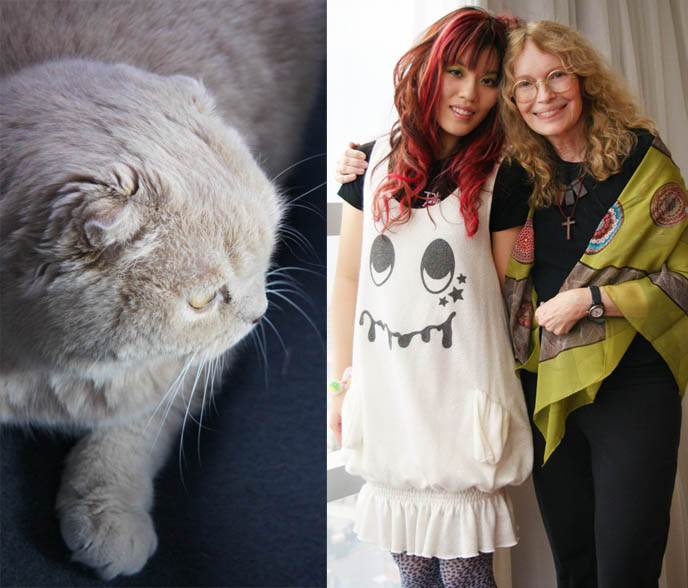 CUTE YUMMY TIME BOOK TOUR DATES, signings and cookbook recipe demos, US tour penguin author La Carmina, celebrity cats with owners, famous actress with pet cat, SCOTTISH FOLD BASIL VISITS HIS GRANDMA MIA FARROW