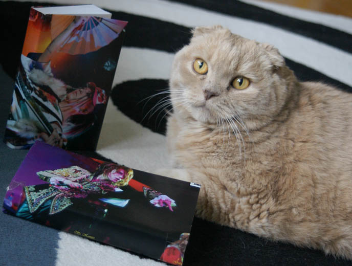 CUTE JAPANESE STATIONERY, PENS, DIY WRAPPED PAPER BOOK COVERS. MIYAVI & VERSAILLES J-ROCK CONCERT IMAGES, visual kei bands performance photos, scottish fold cat, fat yellow pet kitten with yellow eyes, cutest cat Japan, wrapped textbooks, cool book protective covers