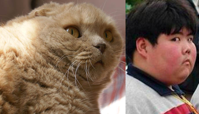 Funny Meme Expression : Little fatty chinese kid photoshopped face funny internet meme