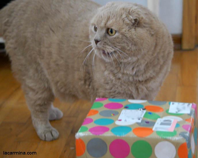Pet Cat Birthday Cake Celebrations And Presents Cutest Scottish