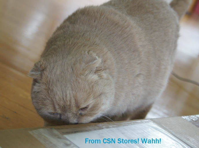 cutest scottish fold cat, cat cafes in tokyo, kawaii neko, cute fat round yellow cat, scottish folds, flop eared foldy eared kitten, famous celebrity cat, cute cat photos, pet picture funny, silly expression lolcat. csn stores, cat sniffing package