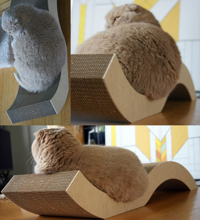 fat round cute male scottish fold cat, MODERN CAT FURNITURE, DESIGNER CAT SCRATCHER MODELED BY CUTE FAT SCOTISH FOLD CAT. PET DESIGN FURNITURE & ACCESSORIES, CHEEKY CHAISE. where to buy specialty custom cat collars, dishes, scratching posts, kawaii neko, cute fat round yellow cat, scottish folds, flop eared foldy eared kitten, famous celebrity cat, cute cat photos, pet picture funny, silly expression lolcat. csn stores
