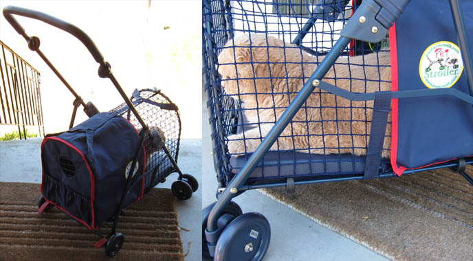 pet strollers and carrier cages, designer pet gear, jeep, BASIL IN A CAT STROLLER! CRAZY CAT LADY OUTFIT, SPOILED PAMPERED PET ACCESSORIES. FUNNY CELEBRITY PETS. kittywalk systems stroller sport, scottish fold cat, baby bear cub, lolcat photos, fat cats