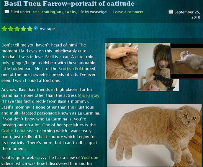 SCOTTISH FOLD CAT tv show, video, basil farrow scottish folds ON DISCOVERY CHANNEL, ANIMAL PLANET CATS 101 TV SHOW & RADIO INTERVIEW, fat cats, fattest cats in world, fold-eared kittens, fat faced cat, cream colored british shorthair, celebrity pets