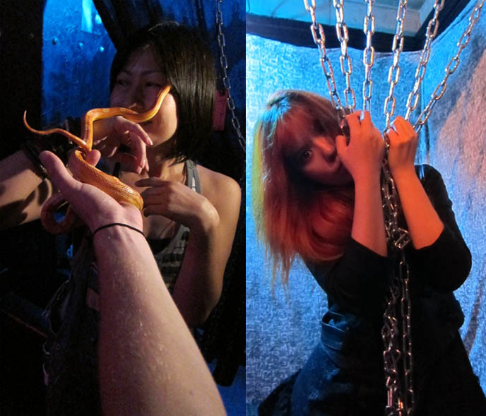 FETISH BDSM BAR IN TOKYO, JAPAN: GUINEA PIG. STRANGEST, WEIRDEST GOTH BARS IN KABUKI-CHO, SHINJUKU.  holding snake, live snakes pets, Crazy theme cafes, japanese weird places, bizarre foods, golden gai drinking, punk bartender, rare horror b-movie posters