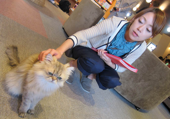 IKEBUKURO CAT CAFE, NEKOROBI NEKO CATS IN TOKYO, JAPAN. ねころび 東京都池袋にある猫カフェです。猫と戯れる癒しの FUNNY JAPANESE FAD, TREND, THEME RESTAURANT. FRANCE JAPAN TRAVEL TV SHOW, TOQUE DE TOKYO DOCUMENTARY. cosplay outfits, ANTOINE DE CAUNES JAPON DOCUMENTAIRE: CANAL PLUS. FRENCH TRAVEL TV SHOW, CO-HOSTED BY LA CARMINA. CANAL + DOCUMENTARY WITH Eurotrash host, peter stuart, tv programmes, tour à Tokyo, rapido television, japanese fashion style, pop culture, weird japan, tv show, documentaire, tv host, CUTE models GIRLS lolita dress. travel show host, coolhunting, consultant