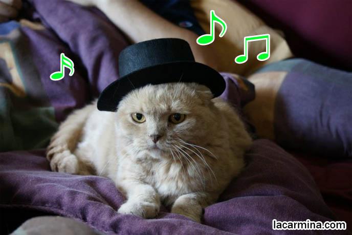 スコティッシュフォールド Japanese cat blogs, Scottish Fold cute kitty, rare purebred kitten, lolcats and funny cat photos.