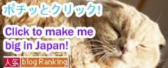 Cute cat photos, lolcat humor, Scottish Fold kitten Basil Farrow, Japan kawaii neko
