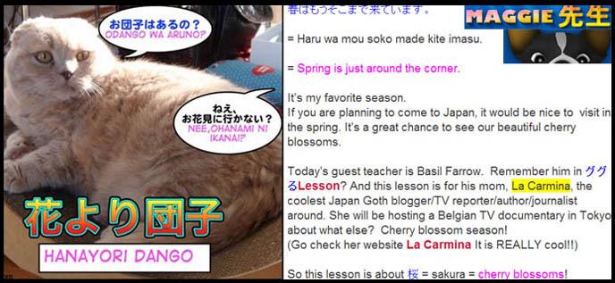 sakura season, cherry blossoms, cutest cat, 花より団子= Hana yori dango +お花見=Ohanami culture, 桜の花 = sakura no hana, cherry blossom culture, learning japanese, definitions, hanami, forecast for cherry blossom flowers